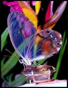 Butterfly from Heidi