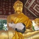 Buddha with Cat