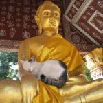 Buddha with Cat
